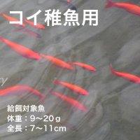 コイ稚魚用C-3
