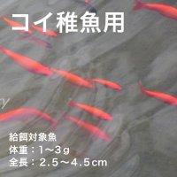 コイ稚魚用C-1