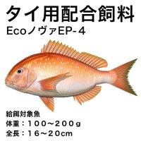 Ecoノヴァ育成EP-4