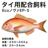 Ecoノヴァ育成EP-5