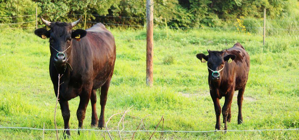 家畜の飼料